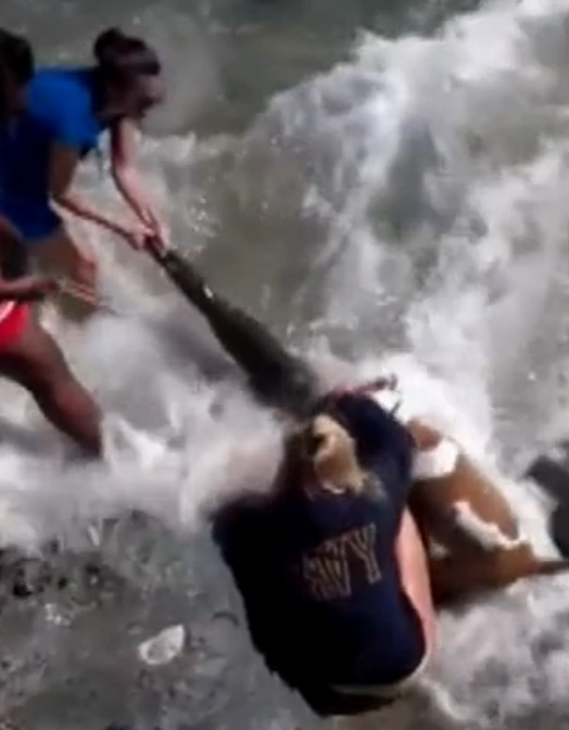 Baby Sea Lion Murder at Laguna Beach