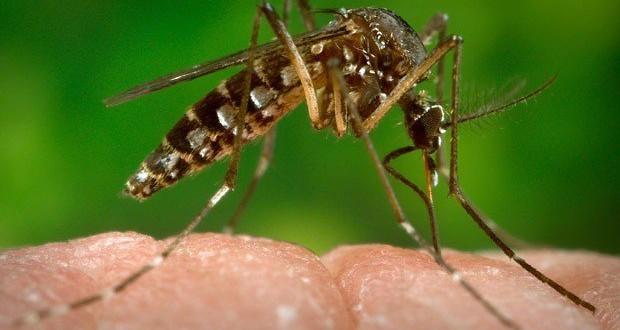 CDC: Blame the Zika Virus on vacation, not invasion